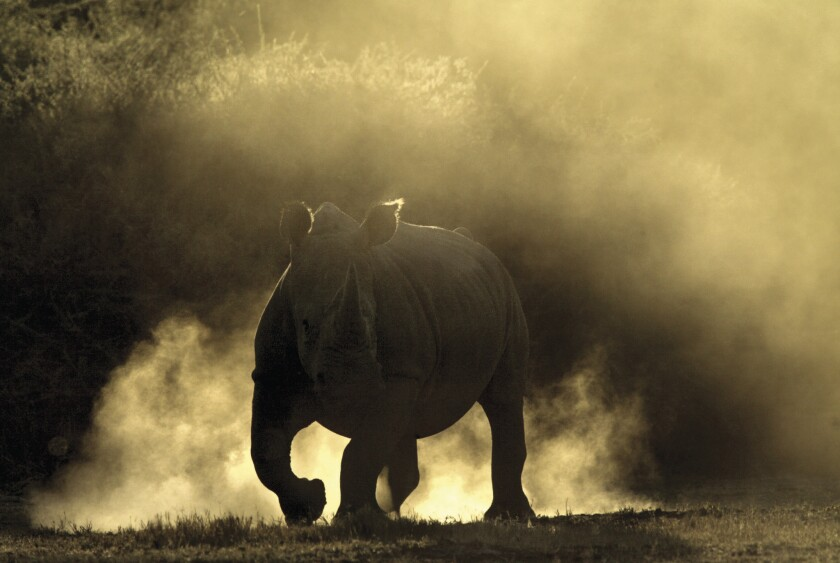 Funds from the Extraordinary Journeys' safari will be used to relocate endangered rhinos to Botswana's Okavango Delta.