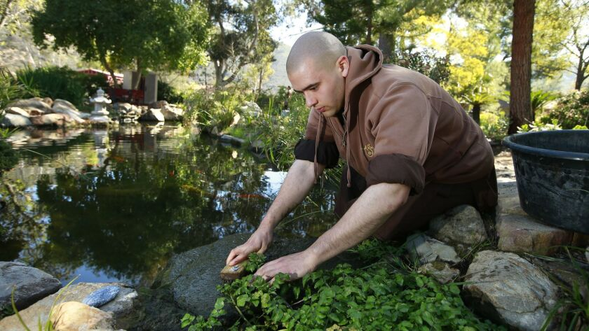 Brother Minh Dung works on the koi pond at the Deer Park Monastery, a Buddhist monastery in Escondido.