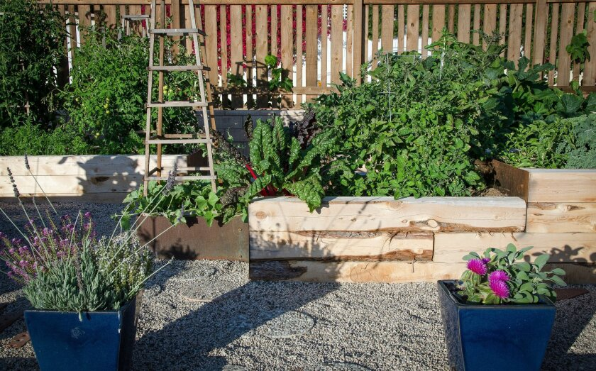 Sustainably harvested juniper beams and steel were used for these raised plant beds.