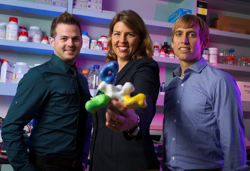 Ebola researchers Charles Murin, left, Erica Ollmann Saphire, center, and Andrew Ward, right, at The Scripps Research Institute. Ollmann Saphire who heads the team of scientists studying a cocktail of three antibodies being used to treat the two American Ebola victims holds a model of the antibodie