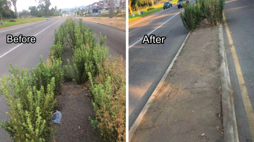 Pictures show a traffic median on Mission Bay Drive before and after the Pacific Beach Town Council cut the weeds Aug. 22.