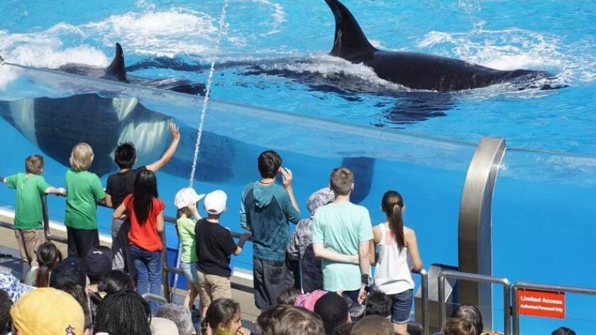 Seaworld San Diego Hints At A Limited Reopening After A Six Month Shutdown Pacific San Diego