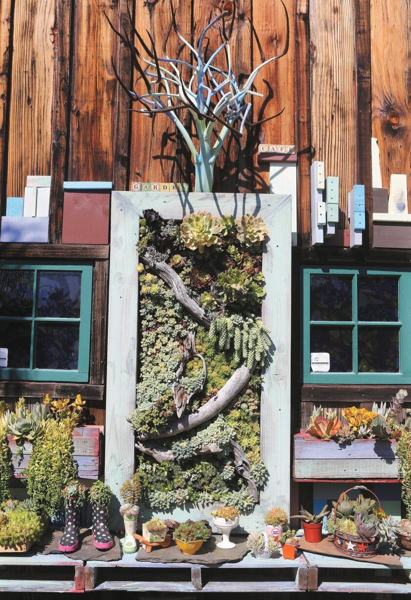An artistic array of succulents at Peter Loyola's Oceanside cafe.