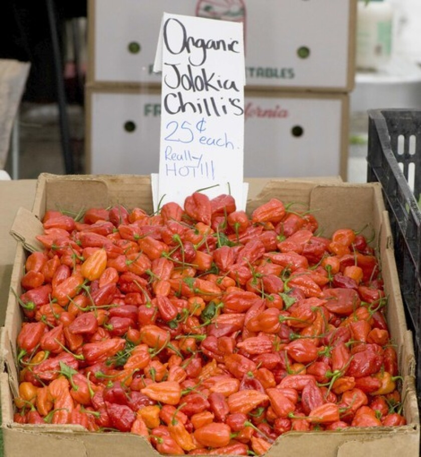 Bhut Jolokia chile peppers, until recently considered the hottest in the world, grown by McGrath Family Farms in Camarillo, at the Santa Monica Farmers Market.