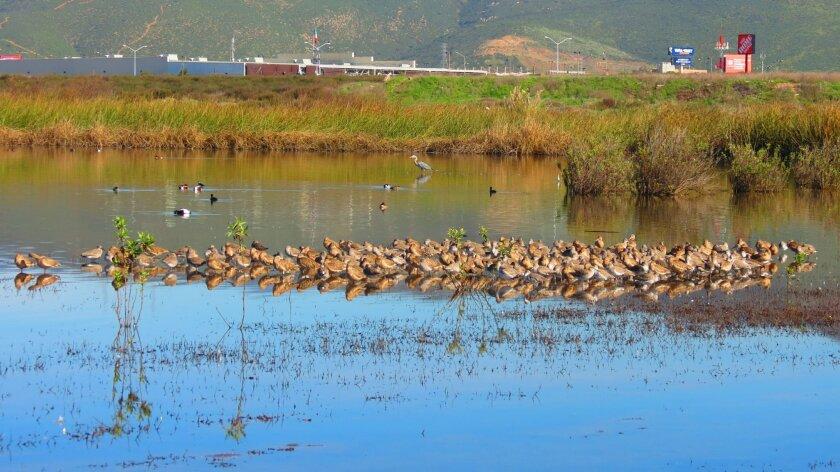 La Lagunita El Ciprés is slated to become Baja California's first state-designated protected natural area.