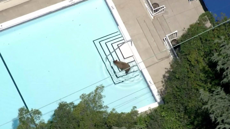Bear wanders neighborhood