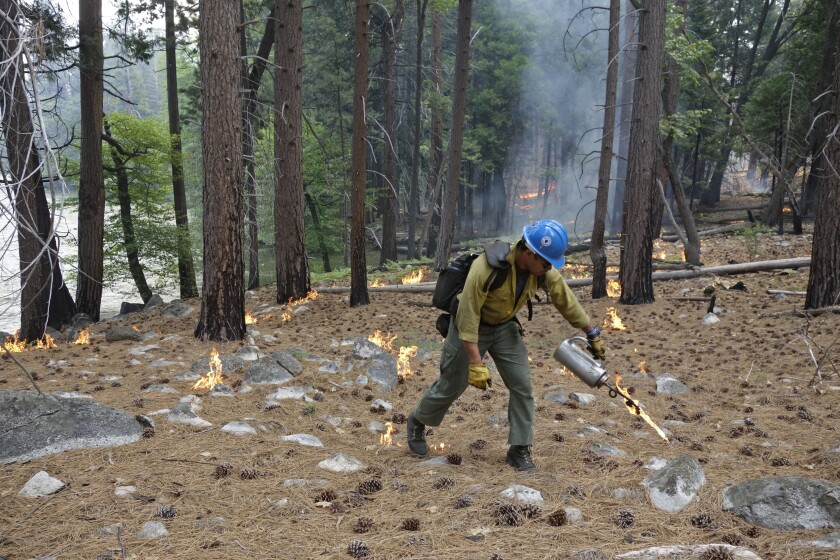 FILE - In this June 11, 2019 file photo, firefighter Charles VeaVea pours flames from a drip torch near the Kings River during a prescribed fire in Kings Canyon National Park, Calif. A bill signed by Gov. Gavin Newsom, Wednesday, Oct. 6, 2021, adds legal protections for private landowners and those who manage prescribed burns by raising the legal standards for seeking wildfire suppression costs from simple negligence to gross negligence. (AP Photo/Brian Melley, File)