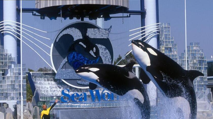 pac-sddsd-courtesy-photos-from-seaworld-20160819