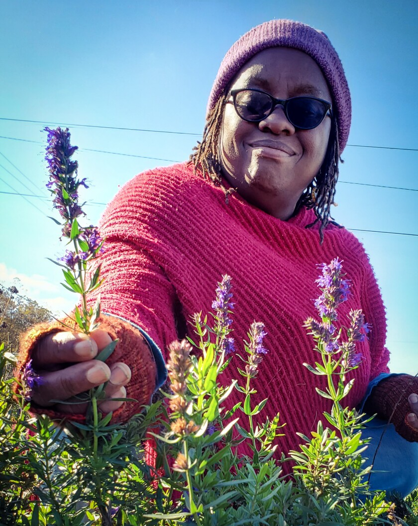Venice Williams holds a sprig of hyssop in Alice's Garden in Milwaukee.
