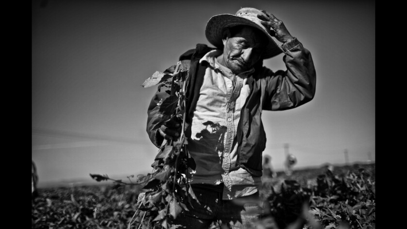 In a third year of California's drought, farmworkers such as Hector Ramirez are lucky to find a few days of work a month in the San Joaquin Valley, where fields lie dry and devastated.