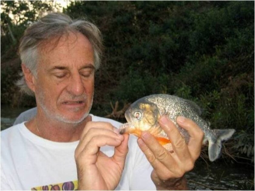 UC San Diego professor Marc Meyers examines a piranha during a trip to the Amazon.