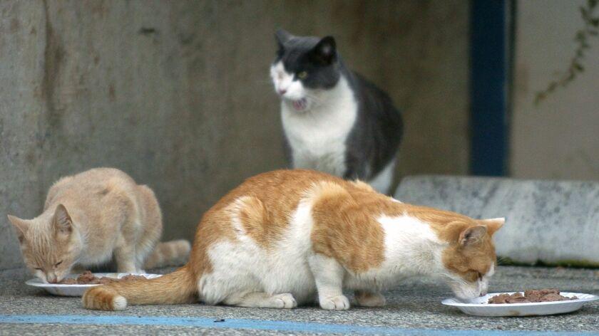Cats eat near Harbor UCLA Medical Center in Torrance.