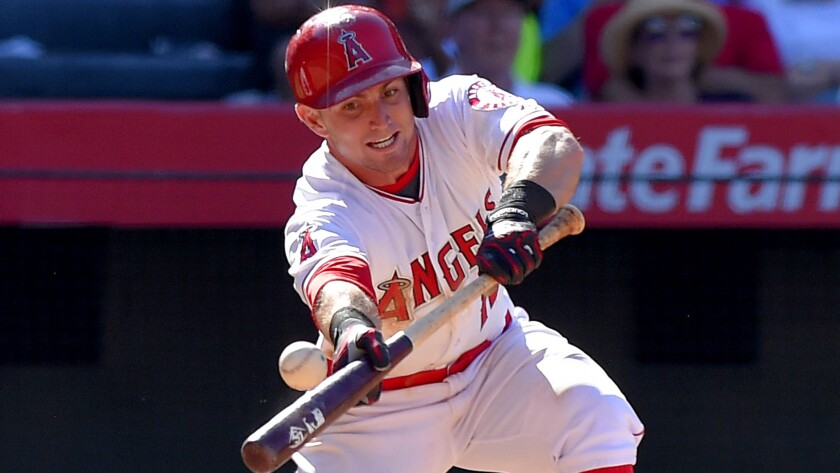 Angels second baseman Johnny Giavotella attemps to bunt against the Orioles during a game Aug. 9 in Anaheim.