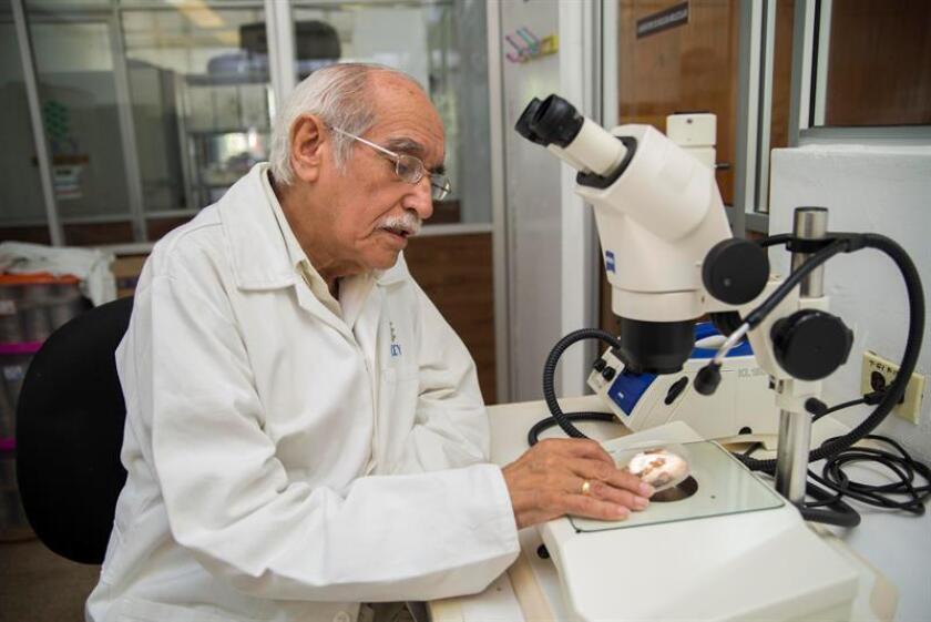 El investigador en Ciencias y Alimentos, Alfonso Larqué Saavedra, posa en un laboratorio este jueves, en Mérida, en el estado de Yucatán (México). EFE