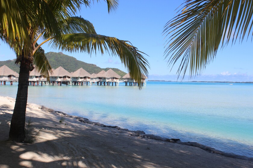 Palm trees, shoreline and bungalows at a resort in Bora Bora