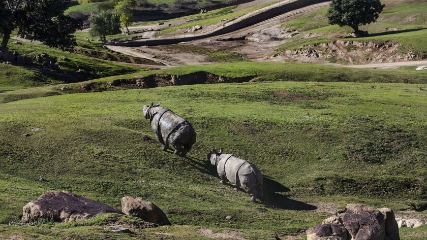SAN DIEGO, CA - JANUARY 6, 2015: A mother,middle, and young son follow a male Southern White Rhino u