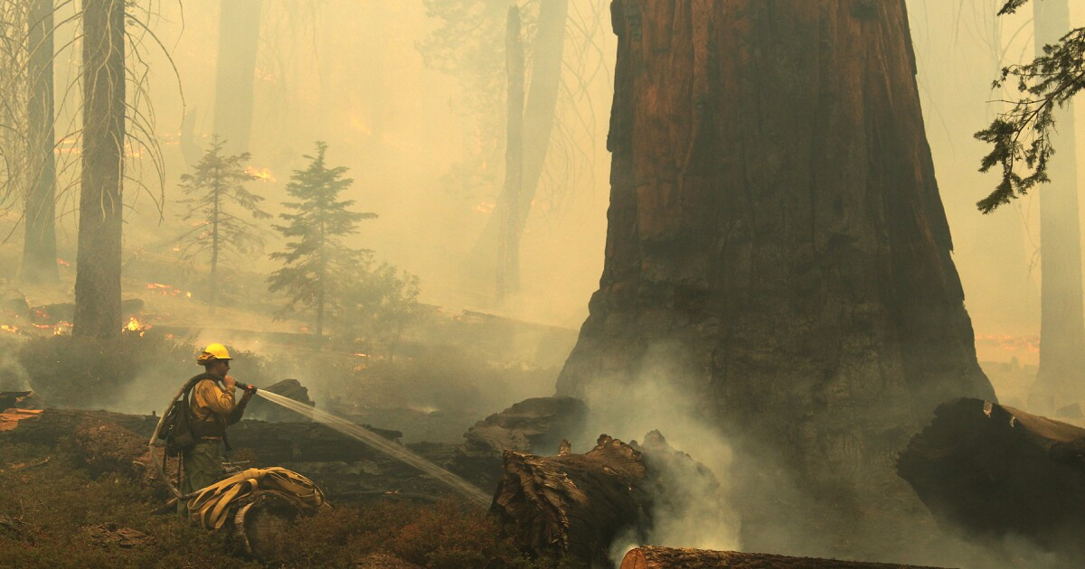 Fire creeps closer to ancient sequoias, reaching Trail of 100 Giants and closing in on other groves