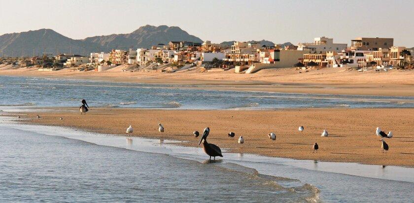 Morning walks on a wide beach near San Felipe Marina & Resort include encounters with a variety of coastal birds.