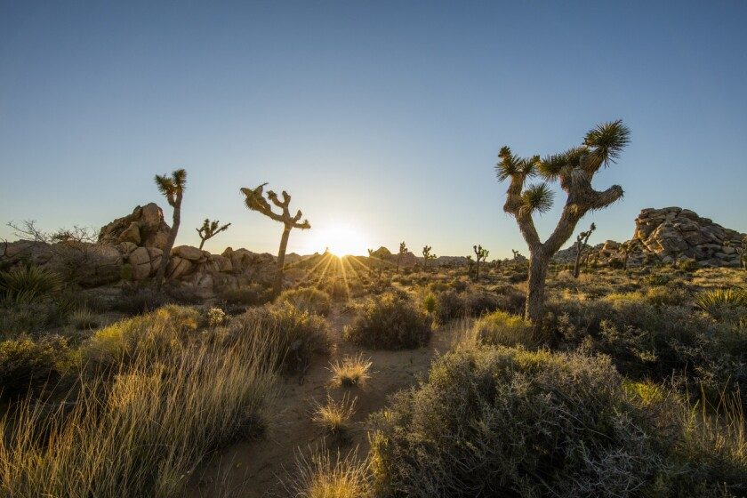 Scenic view of Joshua Tree National Park.