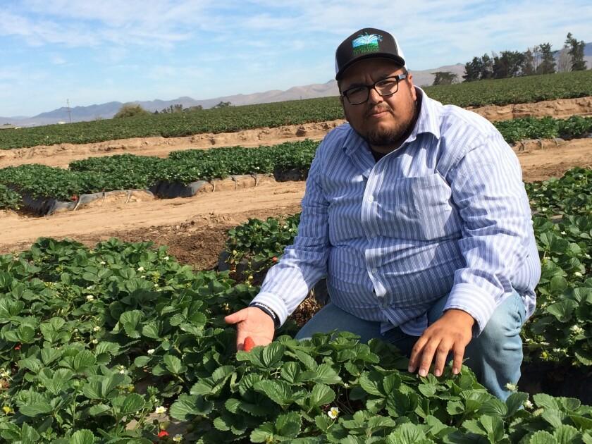 Fidel López, oriundo de Salinas, California muestra las frutas de los campos cultivados en la ciudad de Santa María.