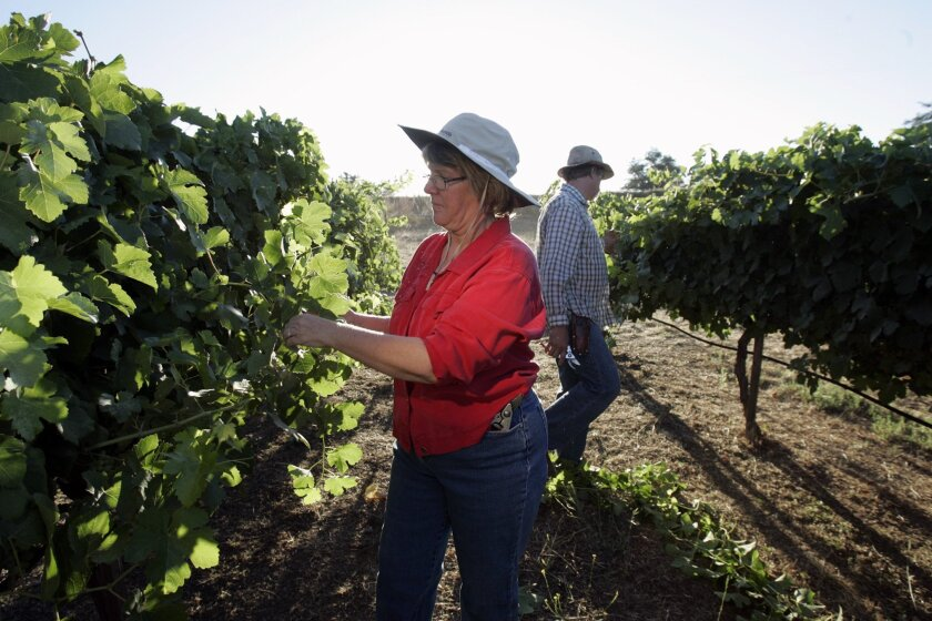 Beth Edwards and her husband, Victor Edwards, own a small vineyard in Ramona, which annually produces about 300 cases of red wines. They were among the handful of winegrowers who sought to open an on-site tasting room.