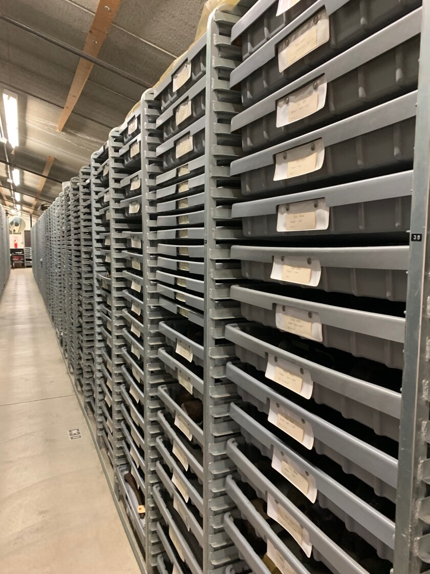 Trays where fossils are stored