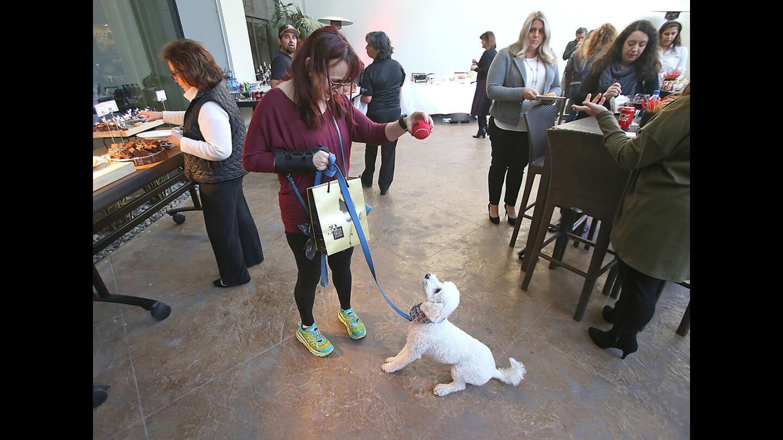 """""""Yappy hour"""" dog celebration at the Westin Hotel"""