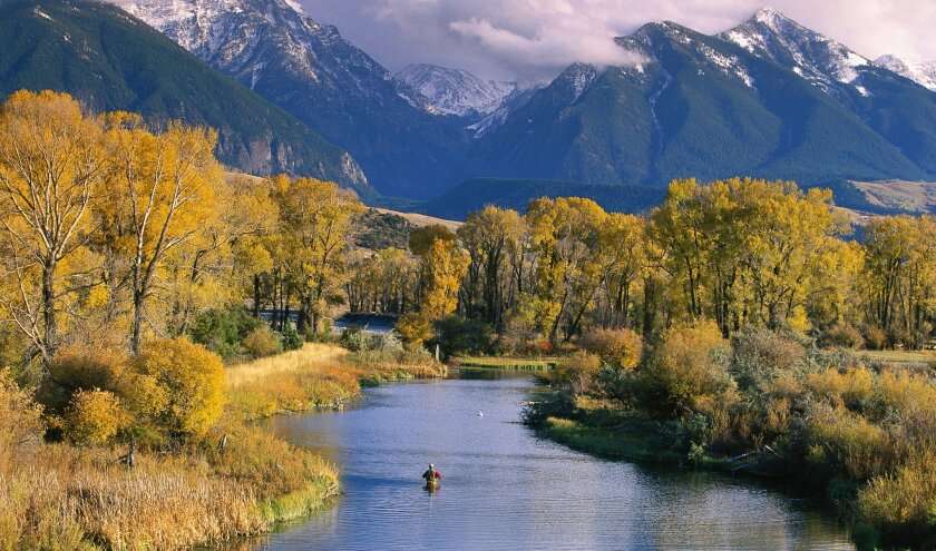 Montana's mountains and fall foliage create a dramatic backdrop for a lone fisherman in a creek in Paradise Valley, north of Yellowstone Park.