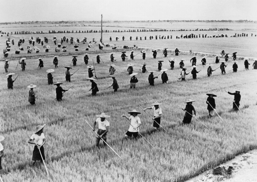 A Chinese rice field
