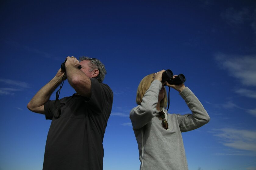 Husband and wife birders, Bill and Dianne Atkinson, along with a larger group led by Phoenix Von Hendy, documented and counted the variety of bird species living in the Ramona grasslands on Saturday as part of the annual Audubon Christmas Bird Count which takes place around the world during the las