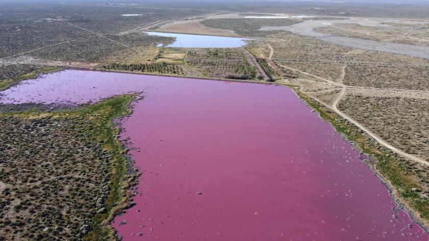 Las aguas de la laguna Corfo son rosadas en Trelew, provincia de Chubut, Argentina.