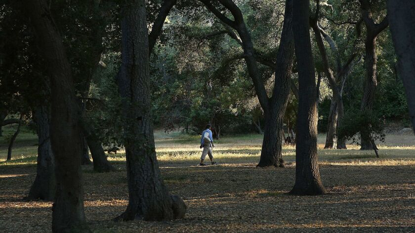 A woman walks on a footpath as the sun sets at Descanso Gardens in the evening on Tuesday, June 20,