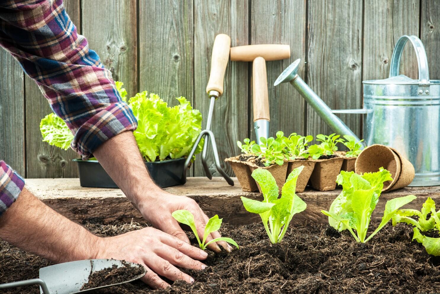 Gardening: What is organic gardening? (Part 2 of 2) - Pomerado News