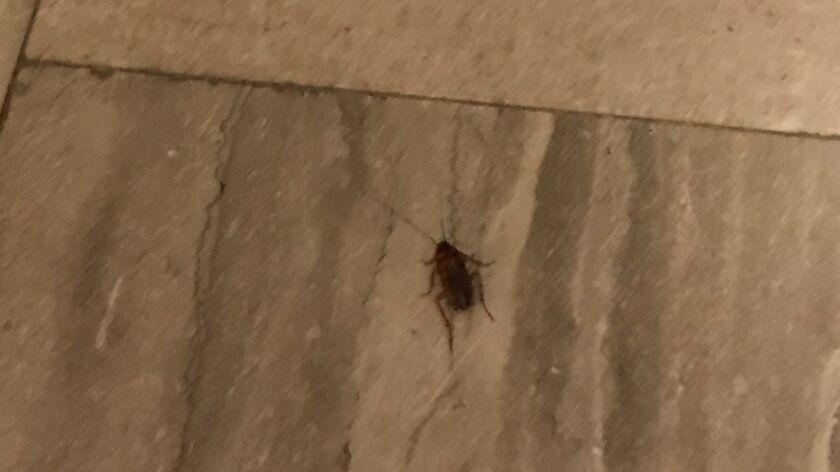 City Hall cockroach