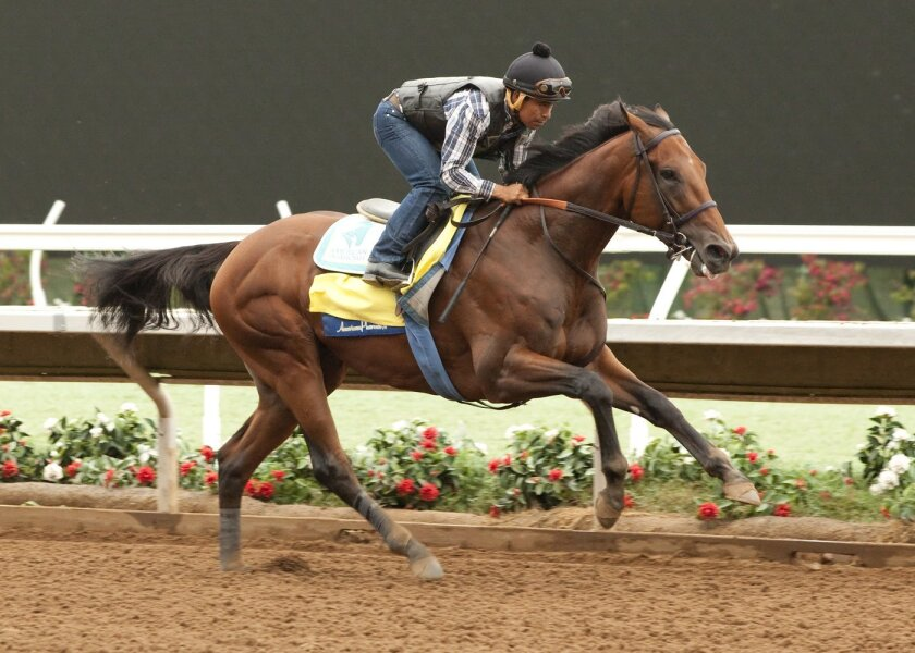 In this photo provided by Benoit Photo, Triple Crown winner American Pharoah, jockey Martin Garcia up, works Tuesday morning, July 28, 2015, at Del Mar Race Track in Del Mar, Calif. (Benoit Photo via AP)