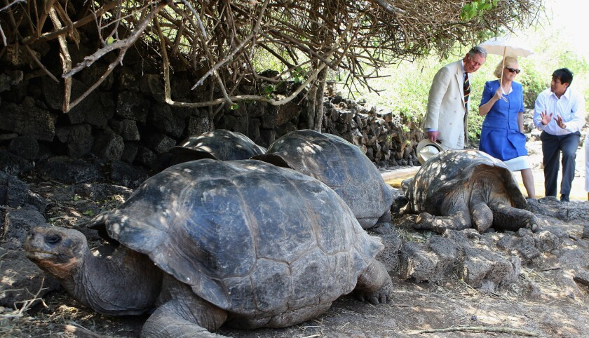 Tortuga Galapago (Photo by Chris Jackson/Getty Images)