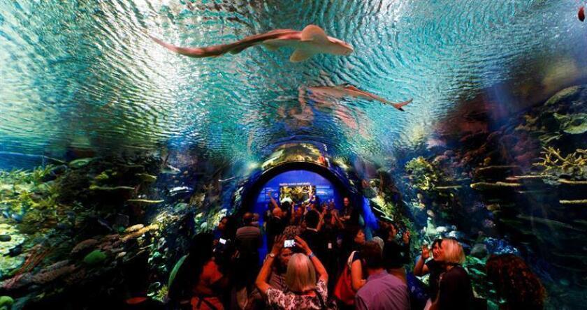 """Decenas de personas observan tiburones durante la nueva exhibición """"Ocean Wonders : Sharks!"""" hoy, jueves 28 de junio de 2018, en el Acuario de Nueva York, en Brooklyn, Nueva York (EE.UU.). EFE"""
