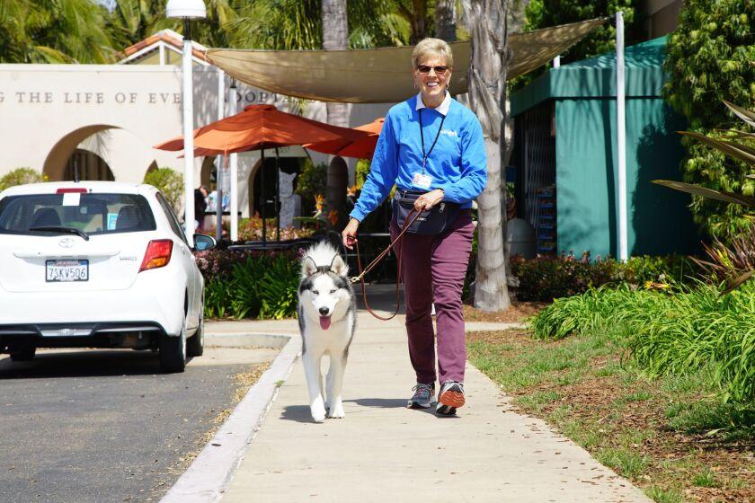 La Jolla resident Linda Falconer has had several volunteer roles with the San Diego Humane Society.