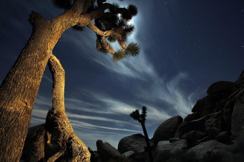 A bright moon illuminates the sky above the desert in Joshua Tree National Park.