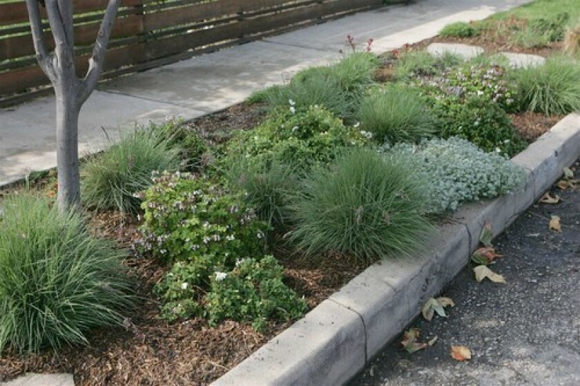 With a little ingenuity, common sense (and maybe some permits), the area between sidewalk and street can be hardy yet attractive. Along this stretch of Venice, landscaper Kathleen Irvine incorporated Lilliputian perennials and ornamental grasses.