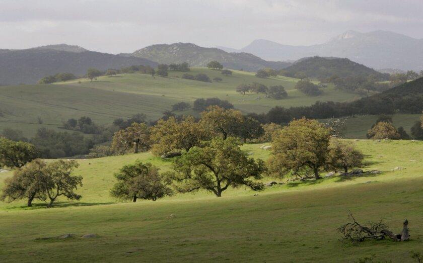 Morning sun illuminates a group of oak trees in Rancho Guejito near Valley Center. U-T file photo