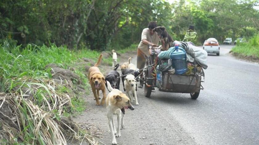A bordo de un triciclo de carga, Edgardo Zúñiga viaja por México rescatando perros que han sido abandonados y están en la calle, mientras intenta crear conciencia contra el maltrato animal. EFE