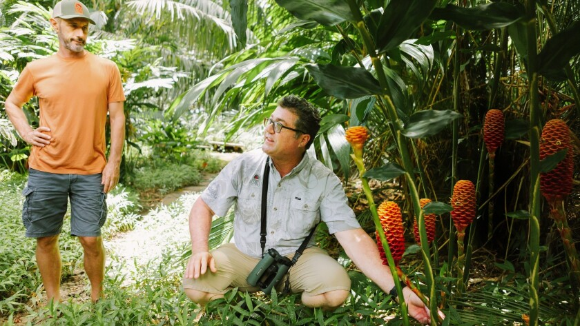 A naturalist guide describes some of the tropical plants that grow in the rain forest at Lyon Arboretum on Oahu.