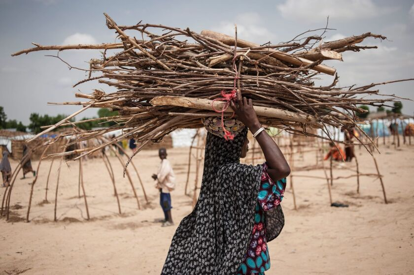 A woman caries branches and reeds to be used for making huts in the Muna settlement.