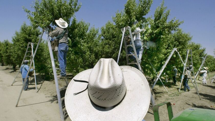 FILE - In this May 13, 2004, file photo, a foreman watches workers pick fruit in an orchard in Arvin
