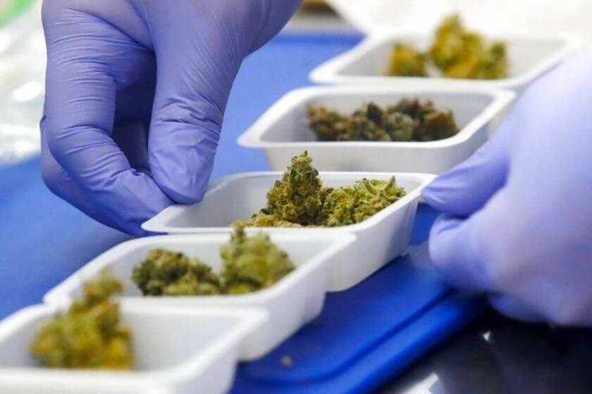 El químico David Dawson coloca varias muestras de marihuana durante una entrevista en CW Analytical Laboratories, en Oakland, California.
