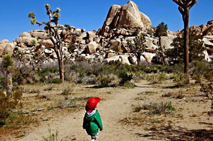 ADVENTURE: Seen through the eyes of 3-year-old Ian, Joshua Tree National Park is a whole new experience.