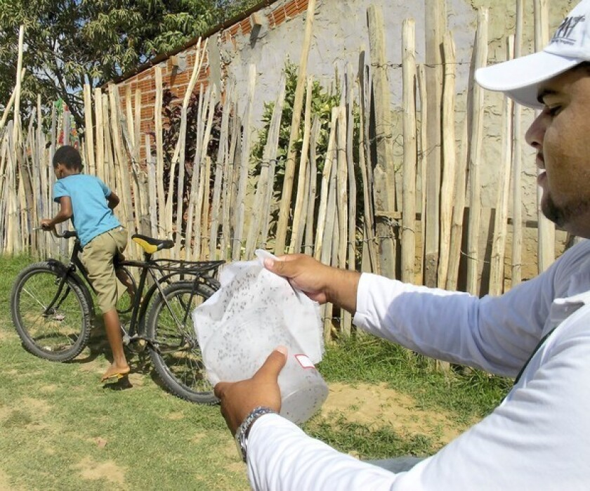 A lab worker releases genetically engineered mosquitoes into a neighborhood in Juazeiro, Brazil.