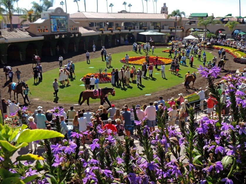 Horses parade through the paddock at Del Mar racetrack, which will open for a new 15-day series of races from Nov. 7-30, 2014.
