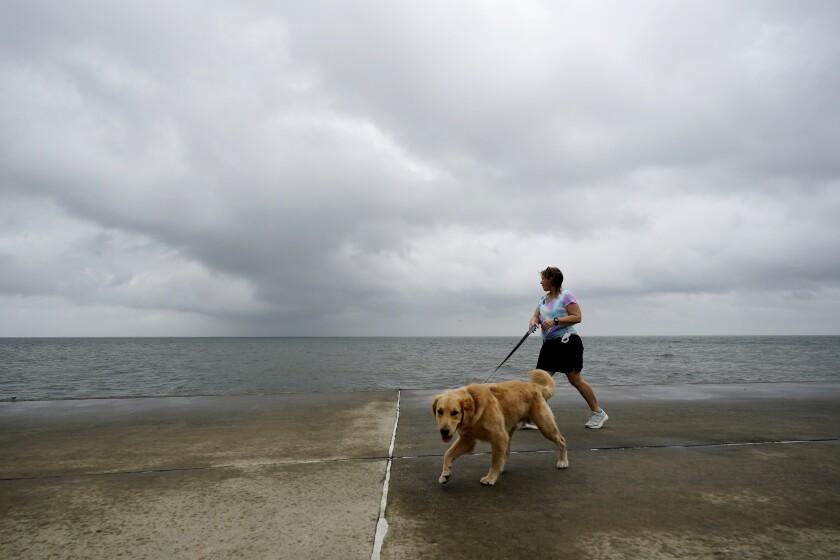 A woman walks a dog along a seawall.